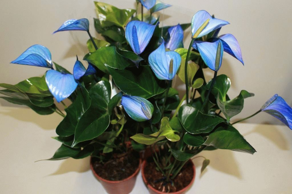 три растения от паразитов