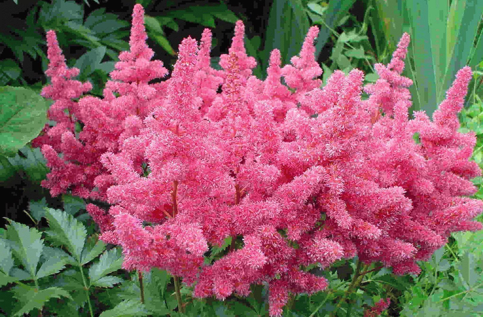 Фото многолетних цветов для сада и их каталог