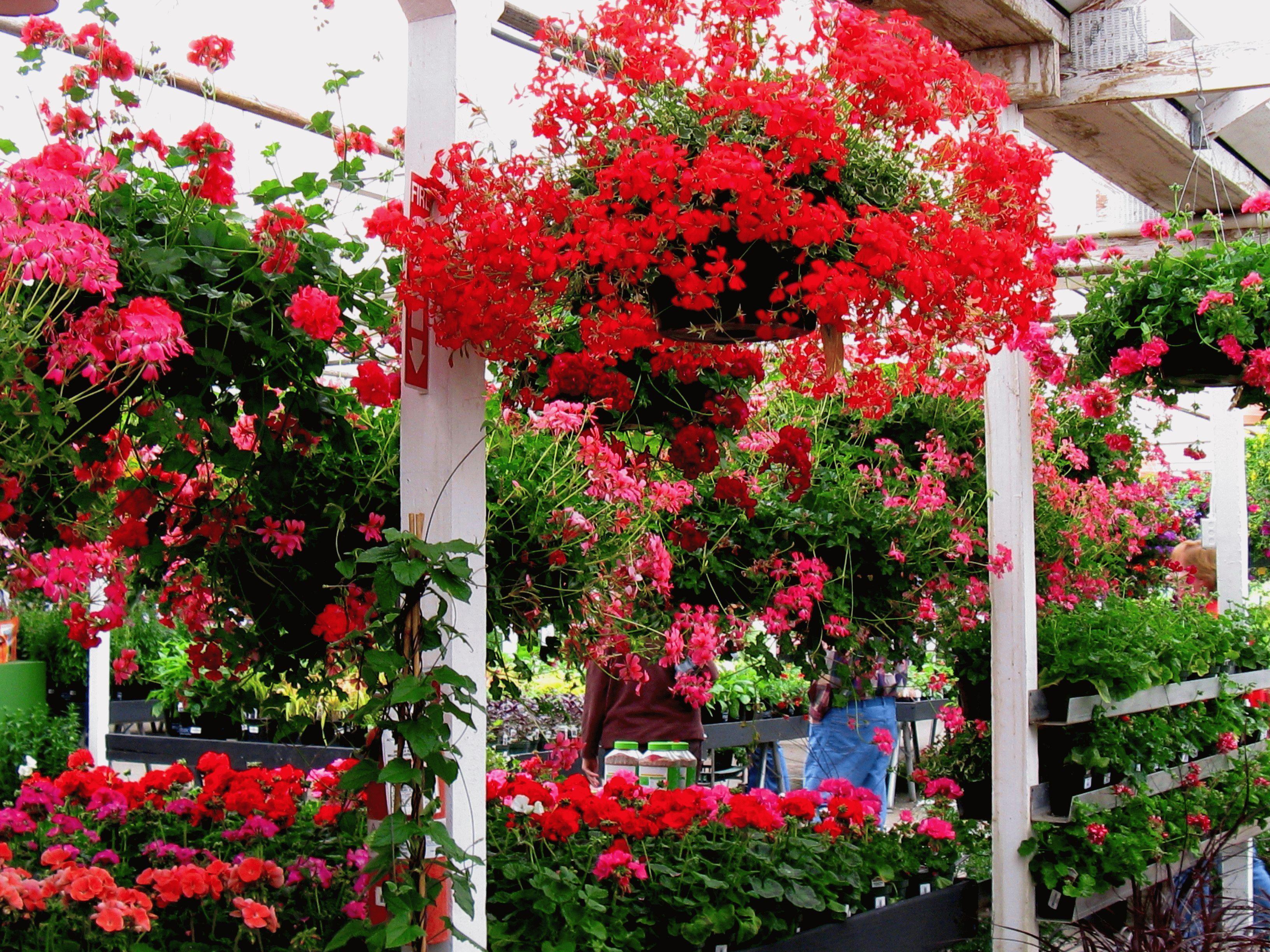 Выращивание цветов на продажу как бизнес
