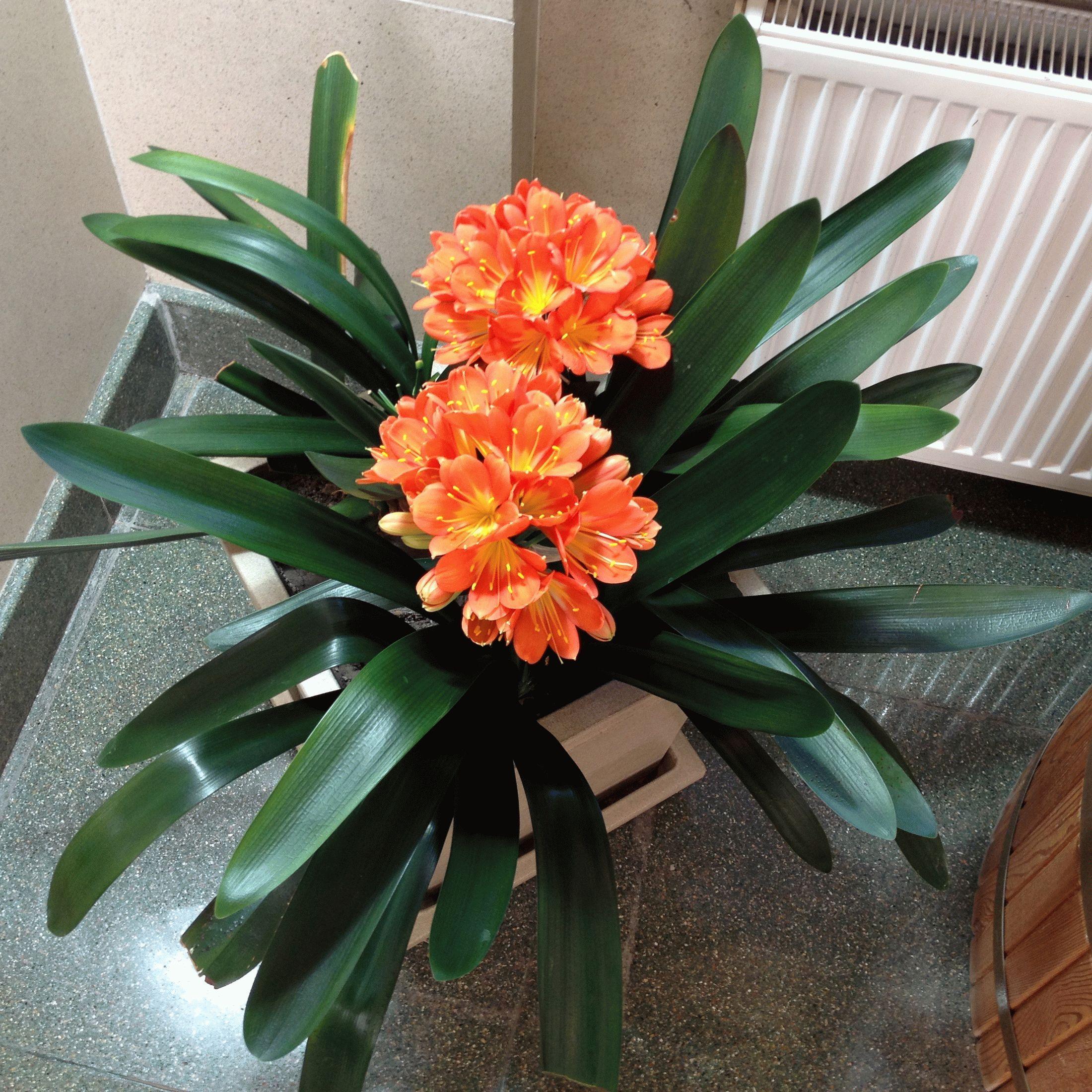 Все комнатные цветы и растения неприхотливые фото