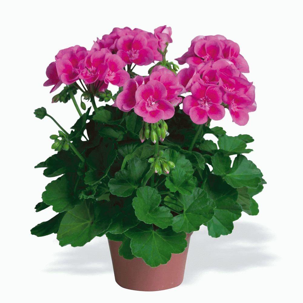 Картинки домашние цветы для детей