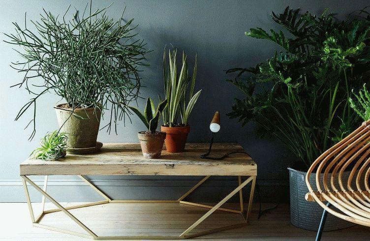 актеллик для комнатных растений