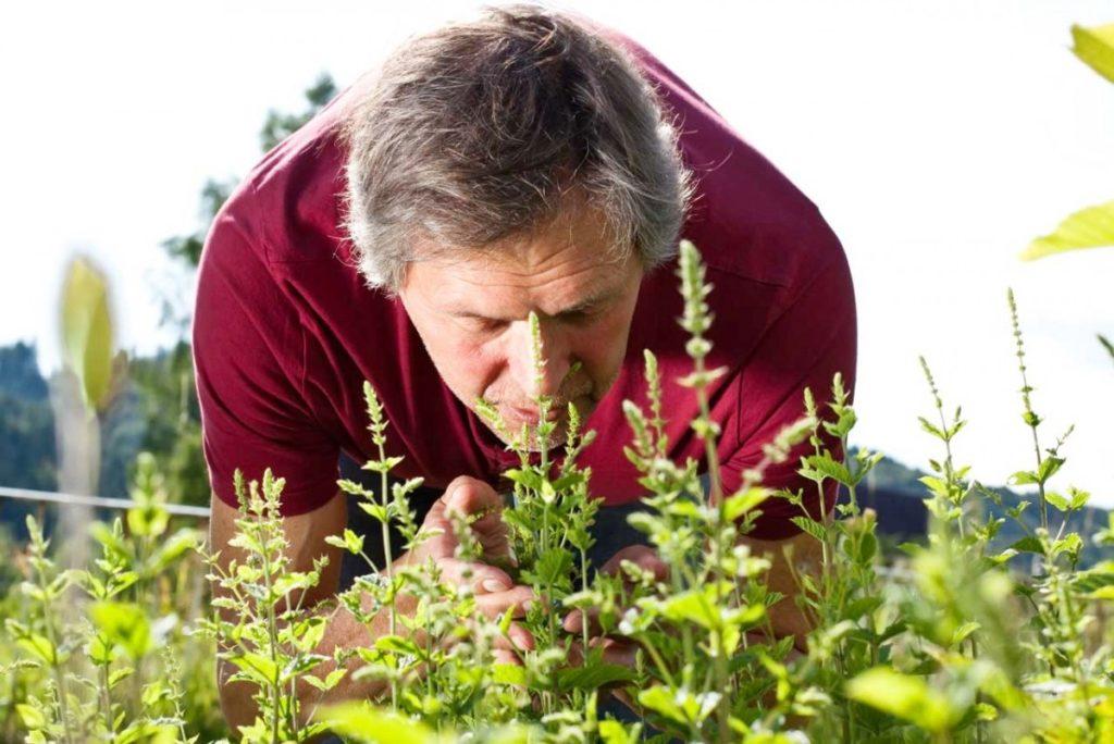 Травы повышающие иммунитет при раке