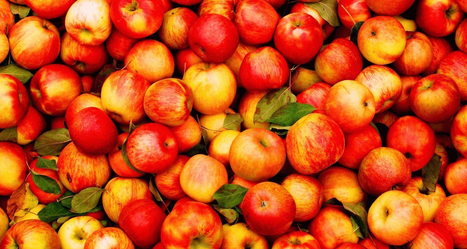 Популярные сорта яблонь для Ленинградской области